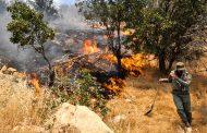 کاهش ۶۷ درصدی آتشسوزی جنگلها در لرستان
