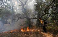 هشدار سازمان محیط زیست برای پیشگیری از آتشسوزی