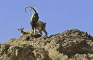 اِسپیکو خرمآباد ۴۵ محیطبان دیگر نیاز است
