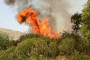 جنگلهای اندیمشک میسوزد و مسئولان انکار میکنند