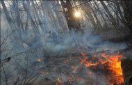 مردم برای مهار آتش جنگلهای کهگیلویه و بویراحمد کمک کنند