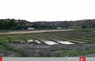 منابع آبی لرستان فدای برنجکاری غیر قانونی