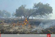 آتشسوزی جنگلهای بلوط اندیمشک ادامه دارد + عکس