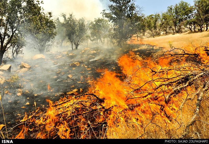 ادامه آتشسوزی جنگلهای صحرا چک اندیمشک