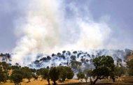 شهروندی که به دنبال آتش میگشت