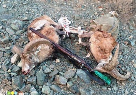 نوار ۷ کیلومتری حاشیه مرزهای کشور شکار ممنوع است