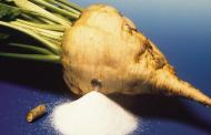 ایران در تولید شکر تا سال ۱۴۰۰ خودکفا میشود
