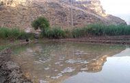 مزارع برنج، آب کشکان را سر میکشند