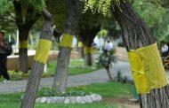 درختان توت به طرح ترافیک اضافه میشوند