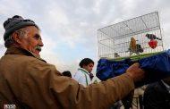 انتقاد از بازار پرندگان خلیج فارس