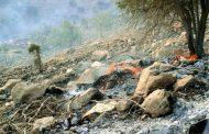 آتشسوزی جنگلهای لرستان مهار شد