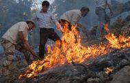 آتش جنگلهای دنا با شاخه درختان و بیل خاموش شد!