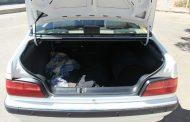 جنازهای در صندوق عقب خودرو تحویلی