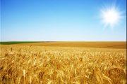 کشاورزی هم علم میخواهد و هم تجربه
