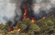 جنگلها را سهوی آتش میزنیم