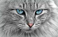 بیانیه انجمن گربههای بدون مرز