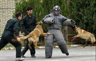 راهاندازی واحد سگهای حافظ محیط زیست