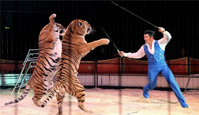 فرجام خوش نمایش حیوانات در سیرکها