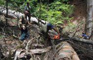 رکوردهای وحشتآور ایران در تخریب جنگلها