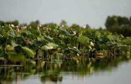 تالاب انزلی؛ دریاچه ارومیهای دیگر