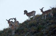 ۱۶۴ حیوان وحشی در خیابانهای تهران