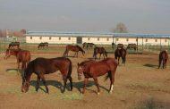افتتاح مجهزترین مجموعه پرورش اسب لرستان