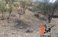 بلوطکُشی در خرمآباد بیخ گوش مسئولان