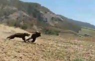 ماجرای قتل خرس ترجنلی را چگونه باید آسیبشناسی کرد؟