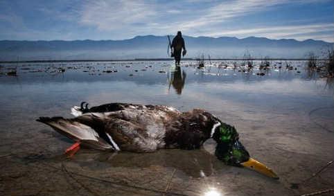 هر گونه صید و شکار پرندگان مهاجر ممنوع است