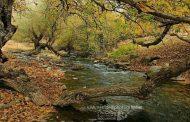 زیبایی خیرهکننده سراب کیَمو در سلطان فصلها