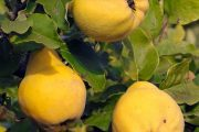 بیکفایتی جهاد کشاورزی لُرستان
