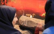 دانشآموزان از موزه تنوع زیستی استان قزوین بازدید کردند