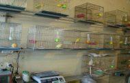 پایش واحدهای عرضه و فروش پرندگان در تاکستان