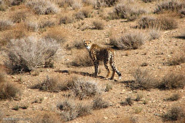 حفاظت از یوزها، پاسداشت میراث جهانی