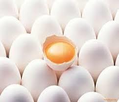 تخممرغ در زمان کوروش کبیر هم گران بود