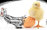یه مرغ دارم روزی دوتا تخم میذاره