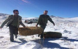توزیع تغذیه حیات وحش در باشگل تاکستان