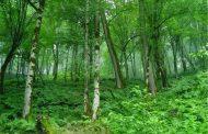 قتل عام درختان هیرکانی در مازندران