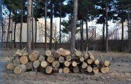 قطع درختان در مخابرات شاهرود