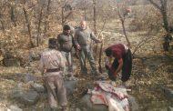 شکارچیان گراز در دو شهرستان لرستان دستگیر شدند
