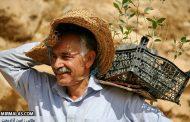 درختی بکاریم که آبیاری نخواهد