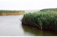 توسعه ناپایدار کشاورزی، زهکشی و آلودگی مهمترین تهدیدات تالابها