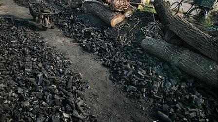 زمستان کابوس جنگلهای بلوط زاگرس