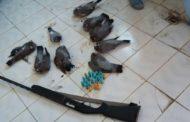 شکارچیان غیرمجاز پرندگان در دام یگان حفاظت محیط زیست تاکستان