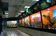بازدید رایگان از موزه تنوع زیستی پردیسان
