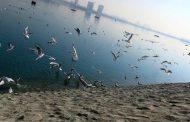 عدم جبران آسان آسیبهای اقتصادی ناشی ازآنفلوانزای پرندگان