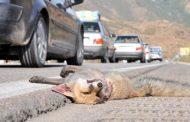 کشف راههای همزیستی انسان و جانور یک اجبار است