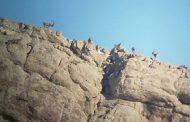 پایان سرشماری پستانداران شاخص استان تهران