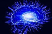 موزه مغز در باغ کتاب تهران راهاندازی میشود