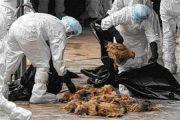 مردم تلفات غیرمتعارف پرندگان را گزارش کنند